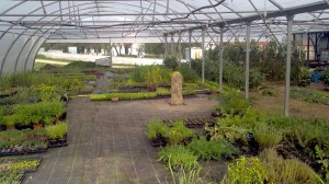 menhir culture plants sous serre